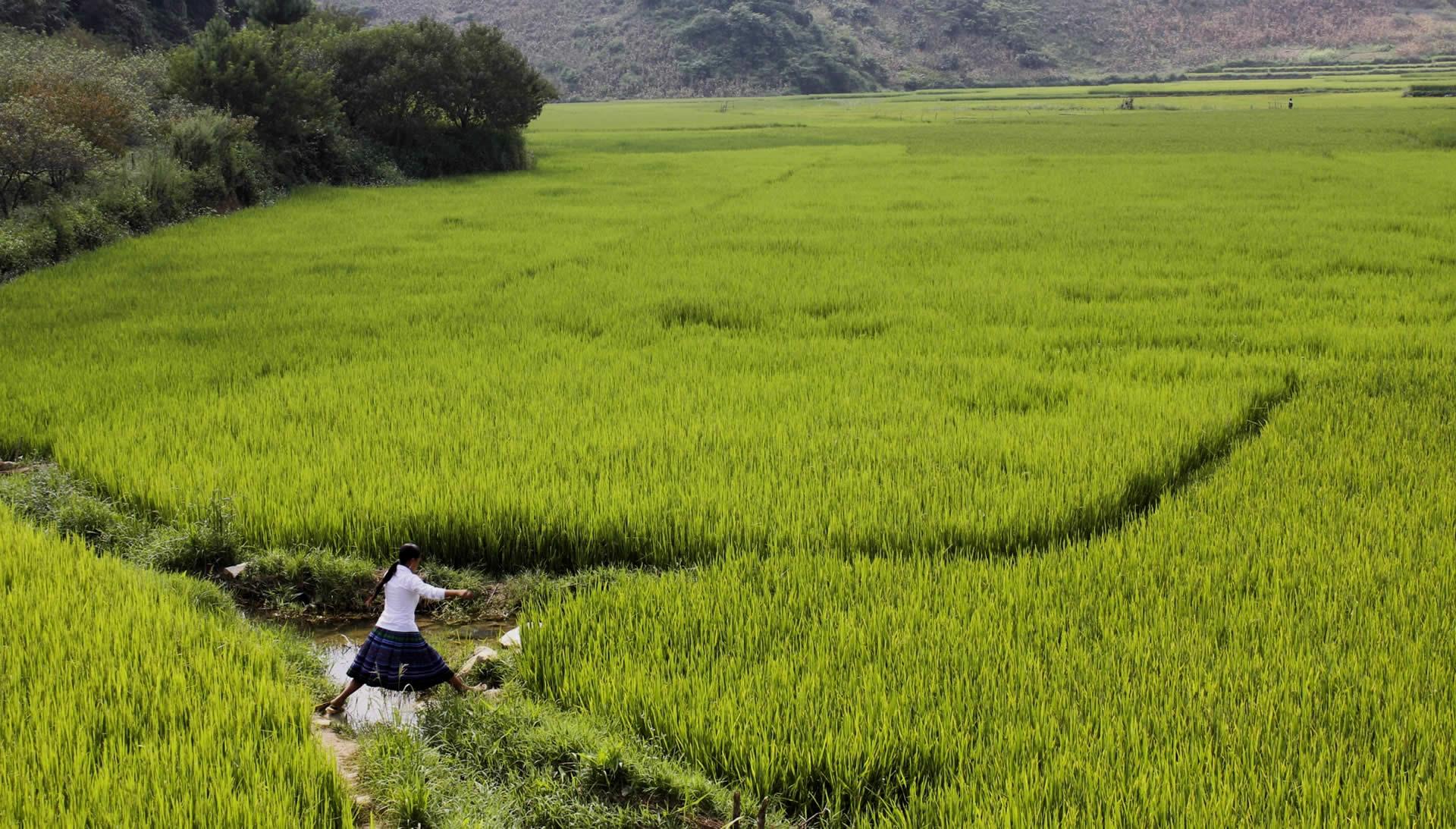 The Asia Foundation - Scenic photo